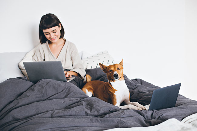 Pretty beautiful girl, freelance designer or maternity leave woman, works remotely from home, sits in bed under blanket, works on laptop business projects, basenji puppy dog types on keyboard laptop with paws
